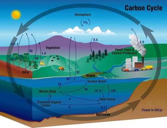 Ocean acidification | Éduquer et donner envie | Space ...